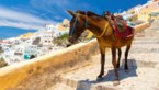 OPROEP. Boetes en geen vakantie voor toeristen die zonder QR-code naar Griekenland reizen
