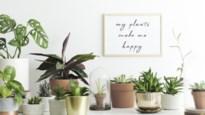 Geen krak in kamerplanten verzorgen? Met dit trucje blaas je ze nieuw leven in
