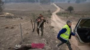 """Australische bosbranden """"grootste natuurramp voor wilde dieren ooit"""""""
