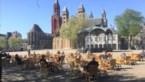 Nederland wordt oranje reisbestemming voor Belgen