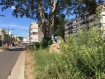 """Onkruid in centrum Lummen staat meer dan een meter hoog: """"Taak van bouwheer"""""""