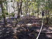 Bosbrand Opitter flakkert op