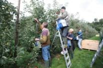 Coronamaatregelen: definitieve richtlijnen voor het inzetten van seizoenarbeiders