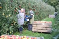 Gouverneur legt regels voor seizoensarbeiders in de fruitpluk vast