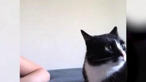 Deze kat wil niet gekust worden door zijn baasjes