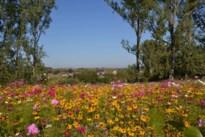 Hoeselaren krijgen postkaartjes met hun 'sjùnste' landschappen