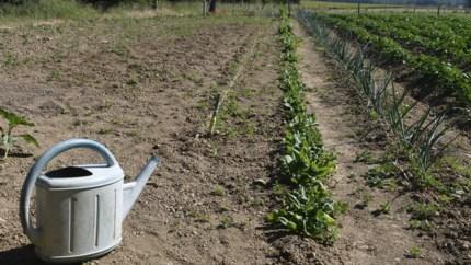 Hoeveel water heeft uw gazon eigenlijk nodig, en wat met uw plantjes en groentjes bij droogte?