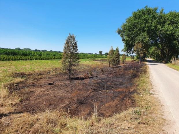 De droogte eist zijn tol: bermbrand langs fietsroutenetwerk in Meeuwen