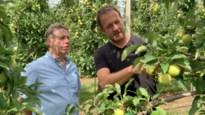 Fruitsector verwacht hogere perenoogst: België wordt vierde grootste producent in EU