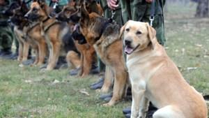 Defensie van plan honden in te zetten om coronavirus op te sporen