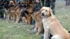 Defensie wil honden inzetten om coronavirus op te sporen