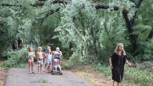 Ravage in Lanklaar: zomers onweer velt takken en bommen