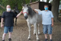 Paardenplagers gaan vrijwilligerswerk doen in dierenopvangcentrum