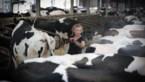 Boeren vechten tegen hitte voor dieren