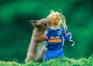 Eekhoorns supporteren voor KRC Genk