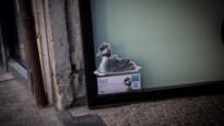'Zin in zomer' tovert Hasseltse binnenstad om tot kleurrijke stadsjungle