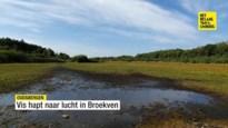 Vis op Broekven hapt naar lucht