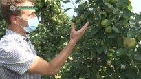 Globachem pakt uit met nieuw middel tegen zonnebrandschade bij fruit