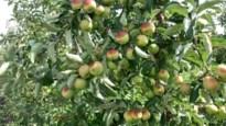 Zonnebrand op fruit niet gedekt door weersverzekering