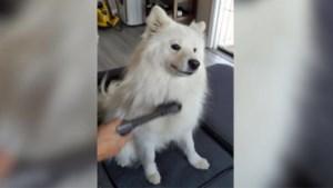 Verliest je huisdier ook zoveel haar? Zo raak je er het snelst vanaf