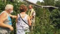 Kris stelt tuin met 400 tomatenrassen open voor publiek