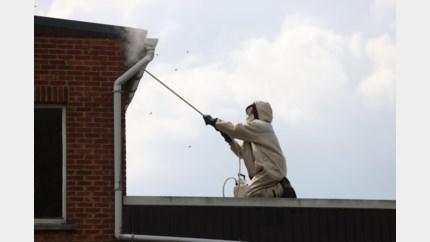 Al 12.000 wespennesten gemeld in Limburg, brandweer heeft handen vol