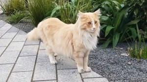 Wordt Mittens de kat Nieuw-Zeelander van het jaar?