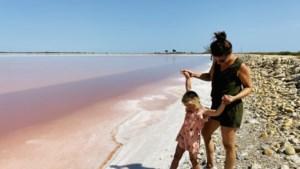 De mooiste plekjes volgens onze journalisten: La vie en rose in de Camargue