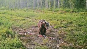 De mooiste plekjes: een hele nacht zwijgen om een beer te spotten in Lapland