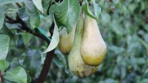Loonse fruitteler betrapt op zwartwerk en ondermaatse huisvesting van plukkers