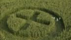 Methode ontdekt om moderne GGO's te detecteren, Greenpeace reageert verheugd