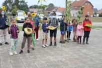 35 jonge tuiniers oogstten hun zonnebloemen