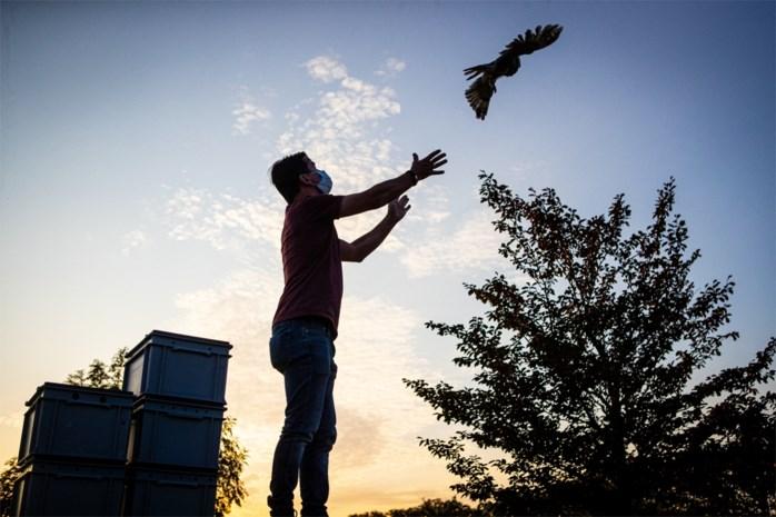 Natuurhulpcentrum laat vijftien vogels vrij op Herkenrode