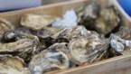 """Oesterseizoen officieel geopend in Zeeland: """"Goed gevuld en heerlijk van smaak"""""""