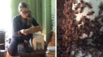 Een bijenkorf verwijderen zonder beschermende kledij? Daar heeft deze moedige dame geen problemen mee