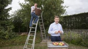 Hoeseltse Fruithoeve schakelt Appermont en Kaëll in voor appelpluk