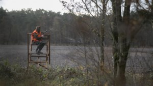 Minister stelt professioneel jagersteam samen om everzwijnprobleem aan te pakken