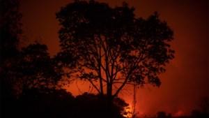 Twaalf verkeersdoden door vallende boom bij Braziliaanse bosbrand