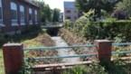 Wat een beverdam veroorzaken kan: droogte, geurhinder én overstromingen in Lanklaar
