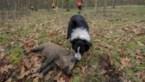 Jagers dreigen met juridische stappen als snelle jachtteams in hun gebied worden ingezet