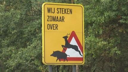 Ministers Demir en Peeters investeren 25 miljoen in diervriendelijke oversteekplaatsen in Limburg