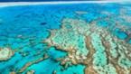 Snorkelaar aangevallen door krokodil in Great Barrier Reef
