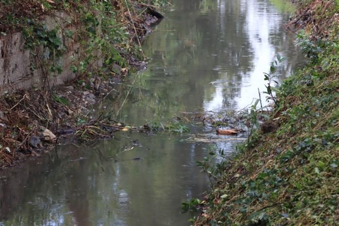 Beverfamilie bouwt dam na één dag opnieuw op dezelfde plaats in de Vrietselbeek