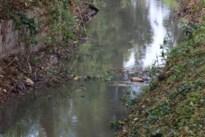 Beverfamilie bouwt dam na één dag opnieuw op dezelfde plaats in de Vrietselbeek<BR />