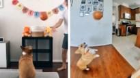 De hond die geen enkel shot mist, baasje leidt zijn viervoeter op tot basketbalster