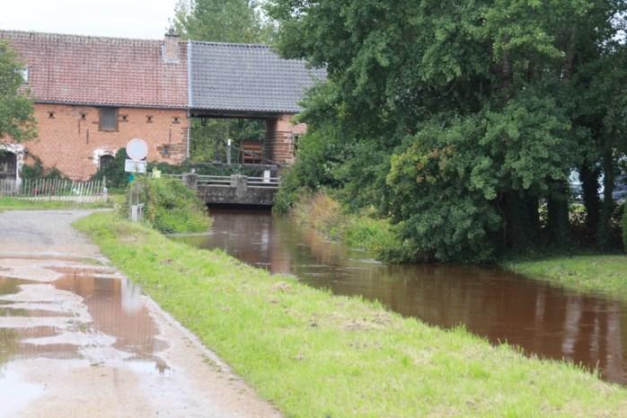 """Bevers veroorzaken bres in Demerdijk: """"Hopen dat het komende uur het waterpeil zakt"""""""