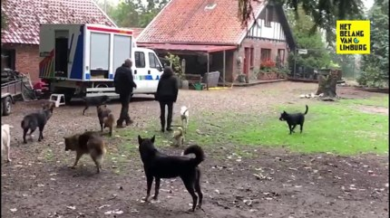 """Drie everzwijnen dood na gevecht met sledehonden in tuin in Beverlo: """"En wij stonden machteloos"""""""