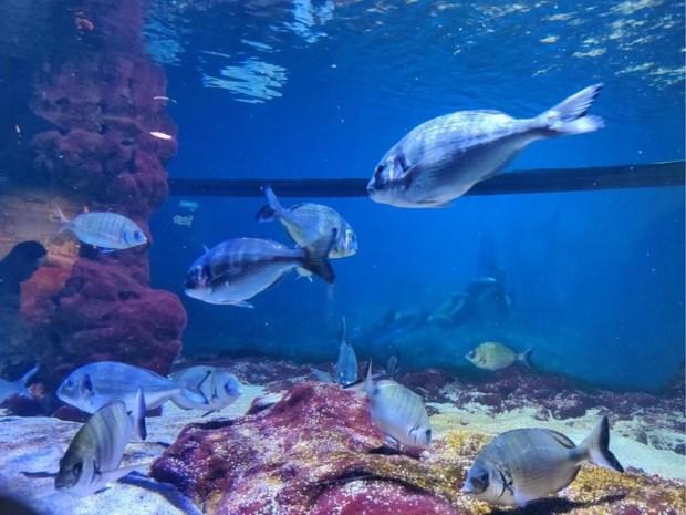 Diep in de zee-gevoel in Boulogne-sur-Mer