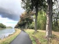Beuken langs Zuid-Willemsvaart sterven af omdat ze fout gesnoeid zijn
