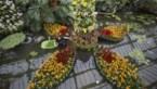 40 procent van de plantensoorten riskeert te verdwijnen